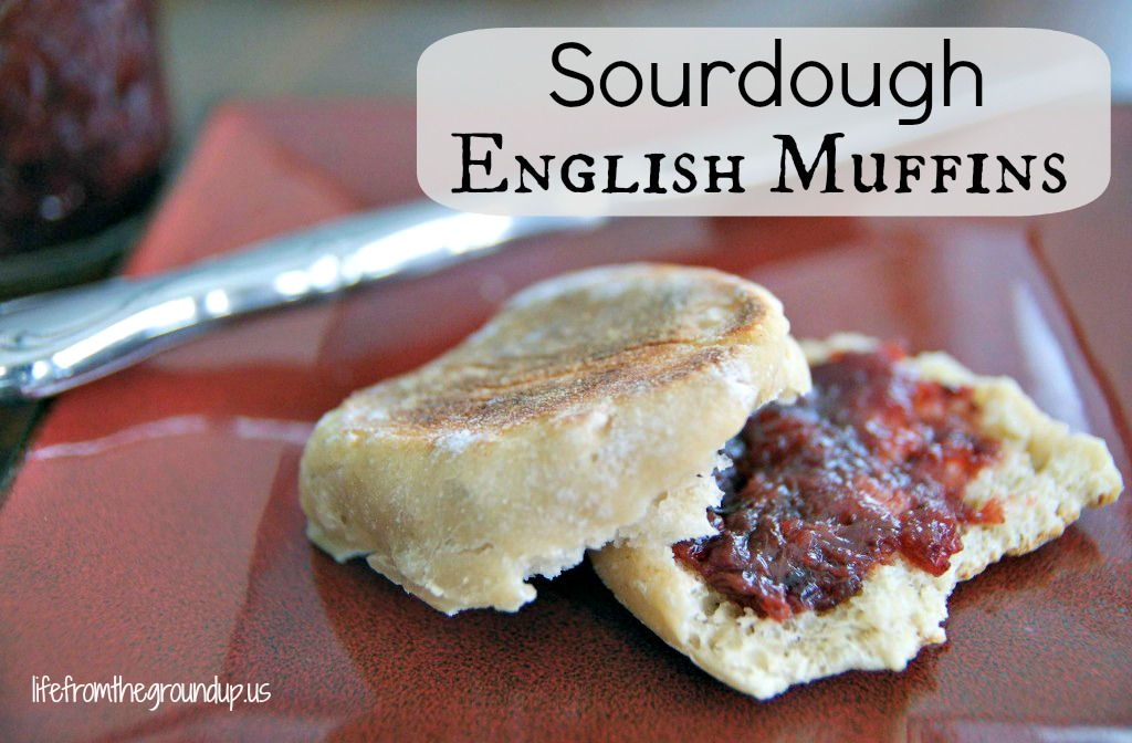 Sourdough English Muffin - lifefromthegroundup.us