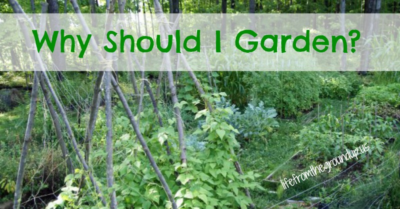 Reasons to Garden - lifefromthegroundup.us