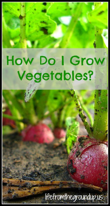 How To Grow Vegetables (Starting a Garden)