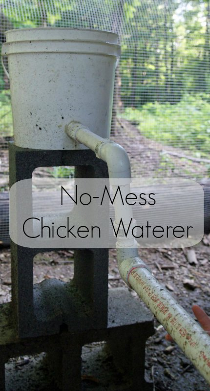 No-Mess Watering Station | Easy To Build Chicken Watering Station Ideas