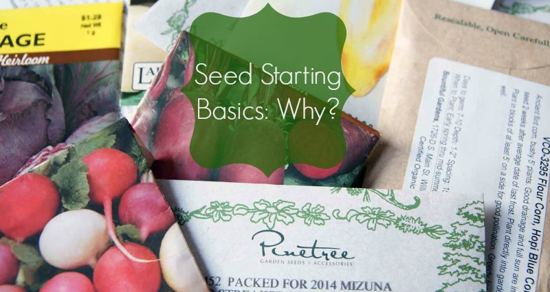Seed Starting Basics 2 - lifefromthegroundup.us