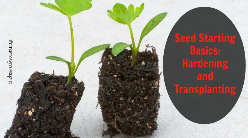Seed Starting Hardening and Transplanting - lifefromthegroundup.us