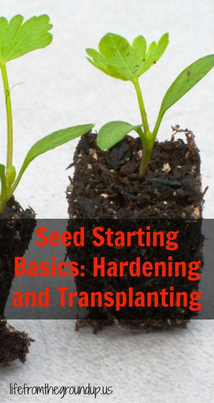 Seed Starting Hardening and Transplanting 2 - lifefromthegroundup.us