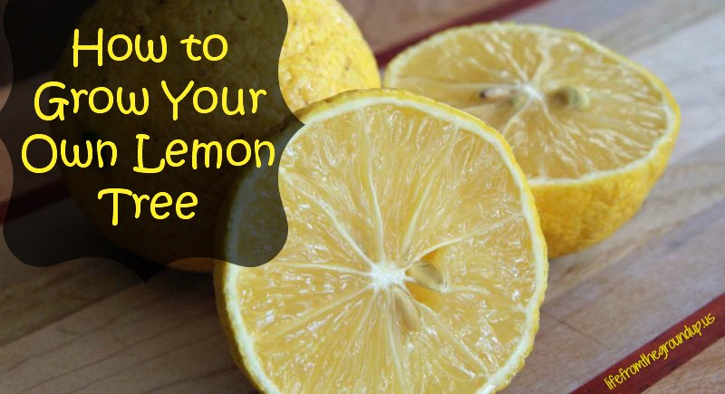 How To Grow a Lemon Tree - lifefromthegroundup.us