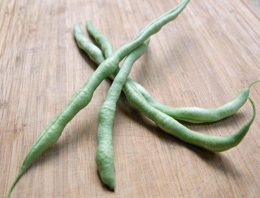 Fortex Bean