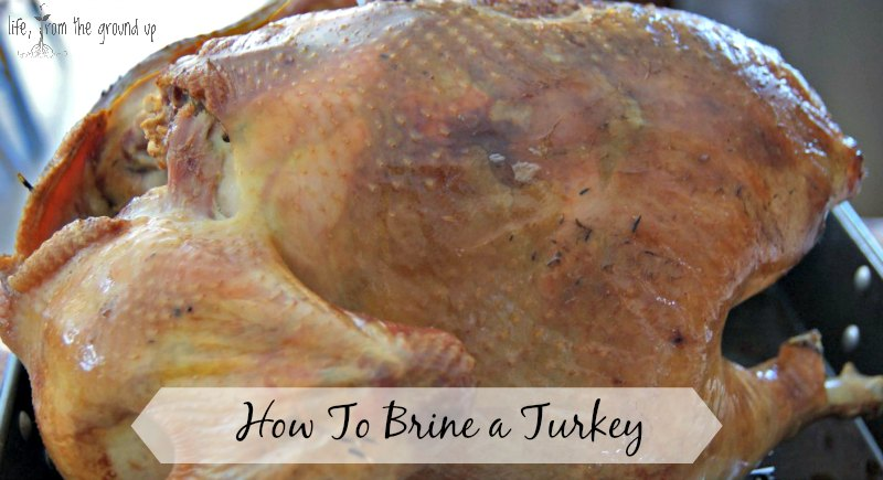 How To Brine a Turkey - lifefromthegroundup.us