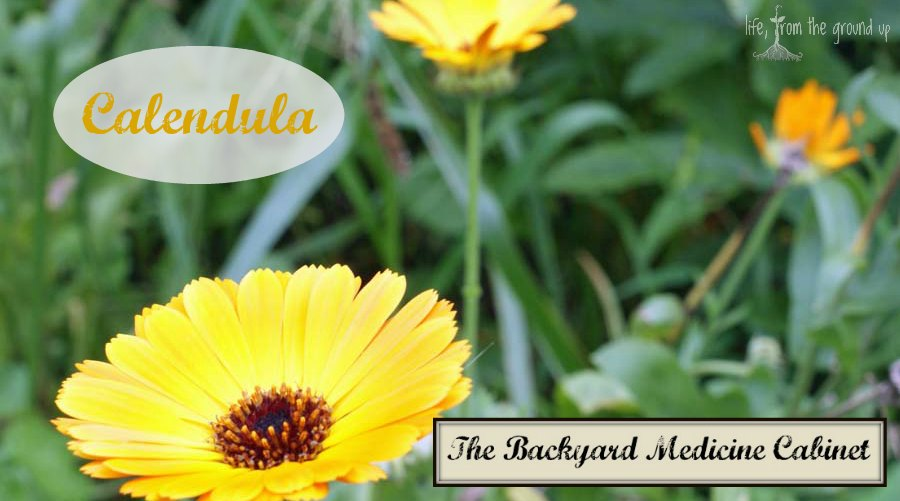 The Backyard Medicine Cabinet - Calendula
