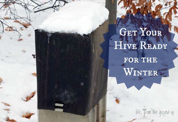 How To Winterize Bees - lifefromthegroundup.us