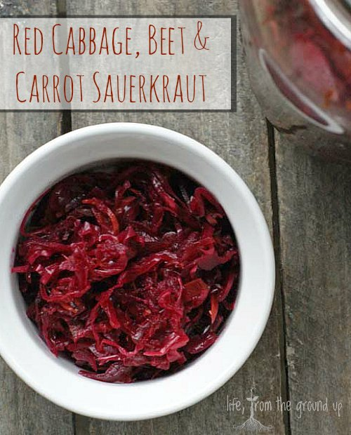 Red Cabbage Sauerkraut - lifefromthegroundup.us
