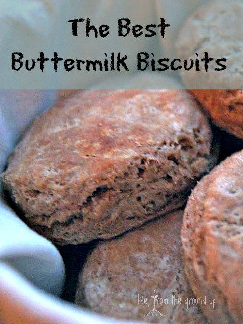 Buttermilk Biscuits - lifefromthegroundup.us