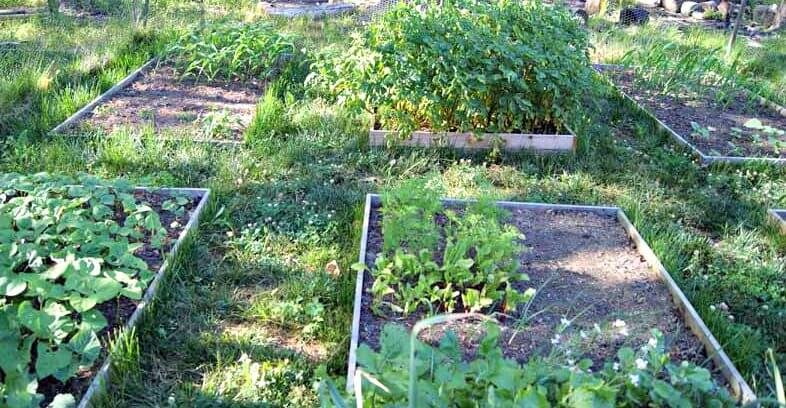 Benefits of Raised Garden Beds