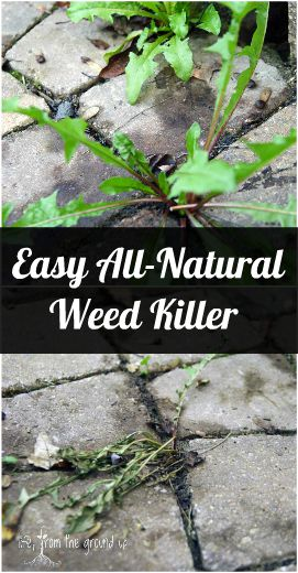 DIY Natural Weed Killer