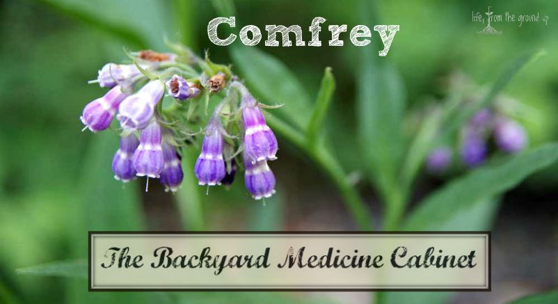 How To Use Comfrey
